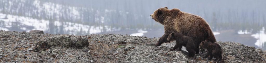 Róbert und der Bär